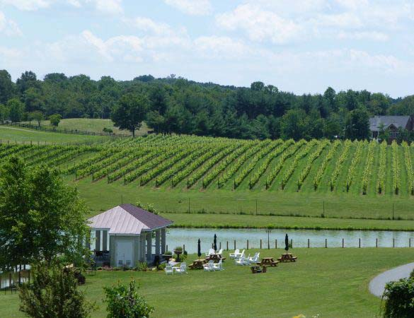 Narmada Winery Honors Late Owner with Legacy Release