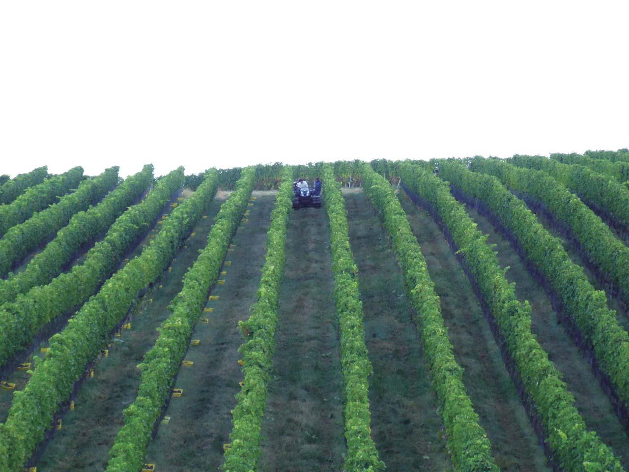 Glen Manor Vineyards wine