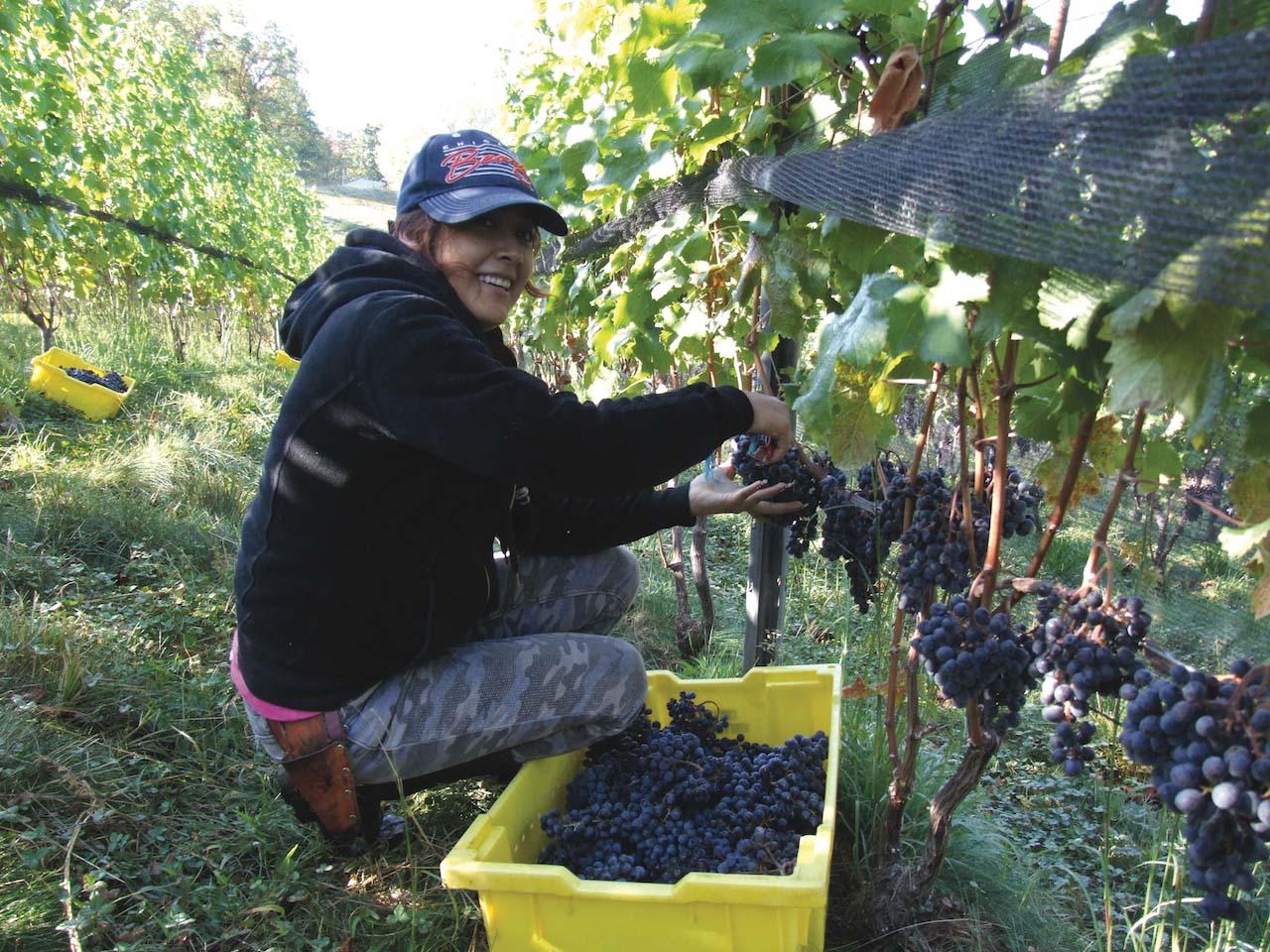 Glen Manor Vineyards