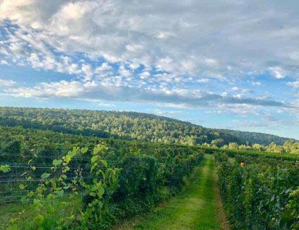 Harpers Ferry Road Wineries & Brewery Passport Tour
