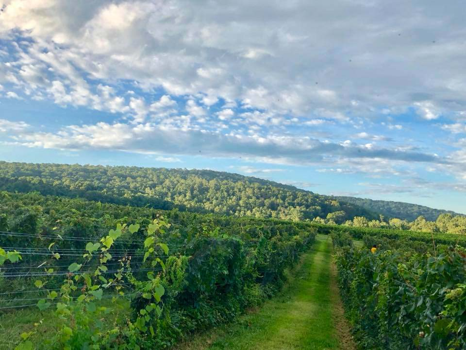 Harpers Ferry Wineries & Brewery Tour