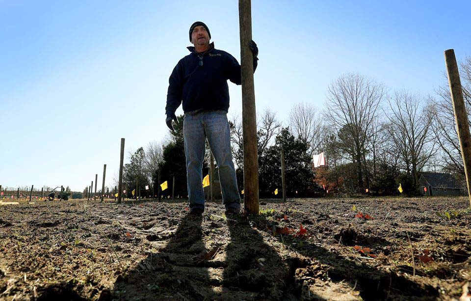 Williamsburg Winery expands
