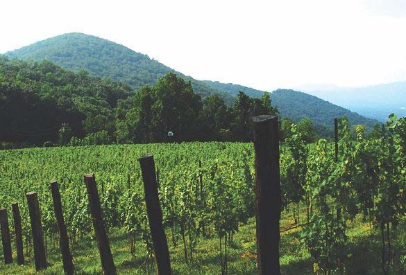Ankida Ridge's New Sparkling Wine