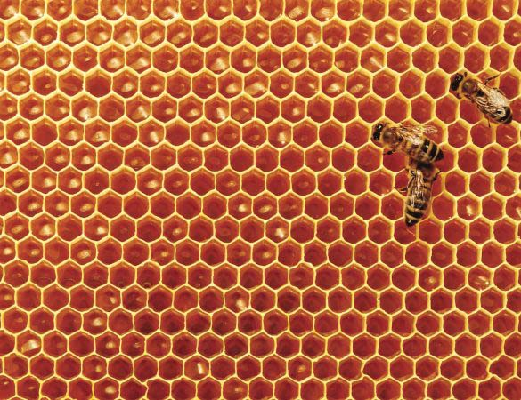 Virginia's Beekeeping Revolution