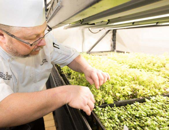 Boar's Head Resort Introduces Hydroponics