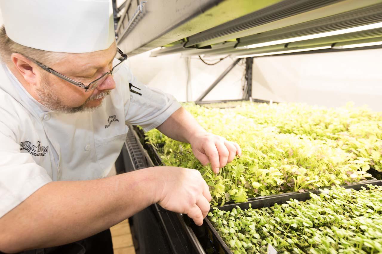 Boar's Head Resort, Chef Ford and hydroponics