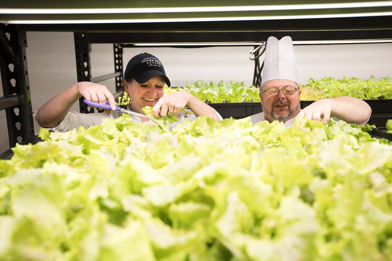 Hydroponics growing at Boar's Head Resort