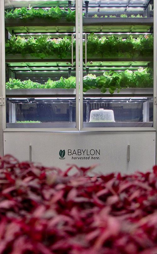 Babylon micro farms-green
