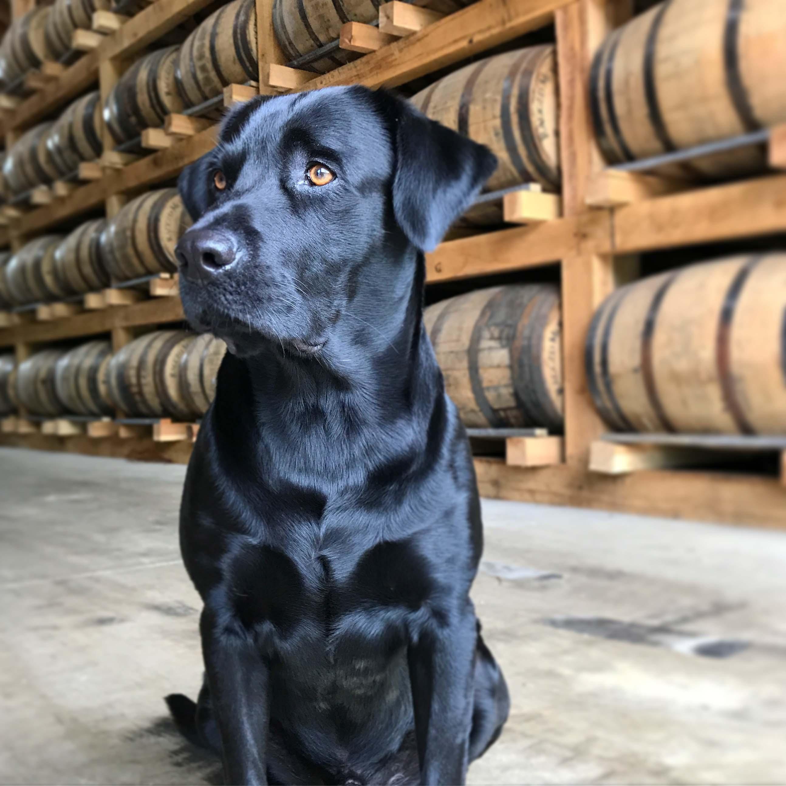 dog at Ragged Branch