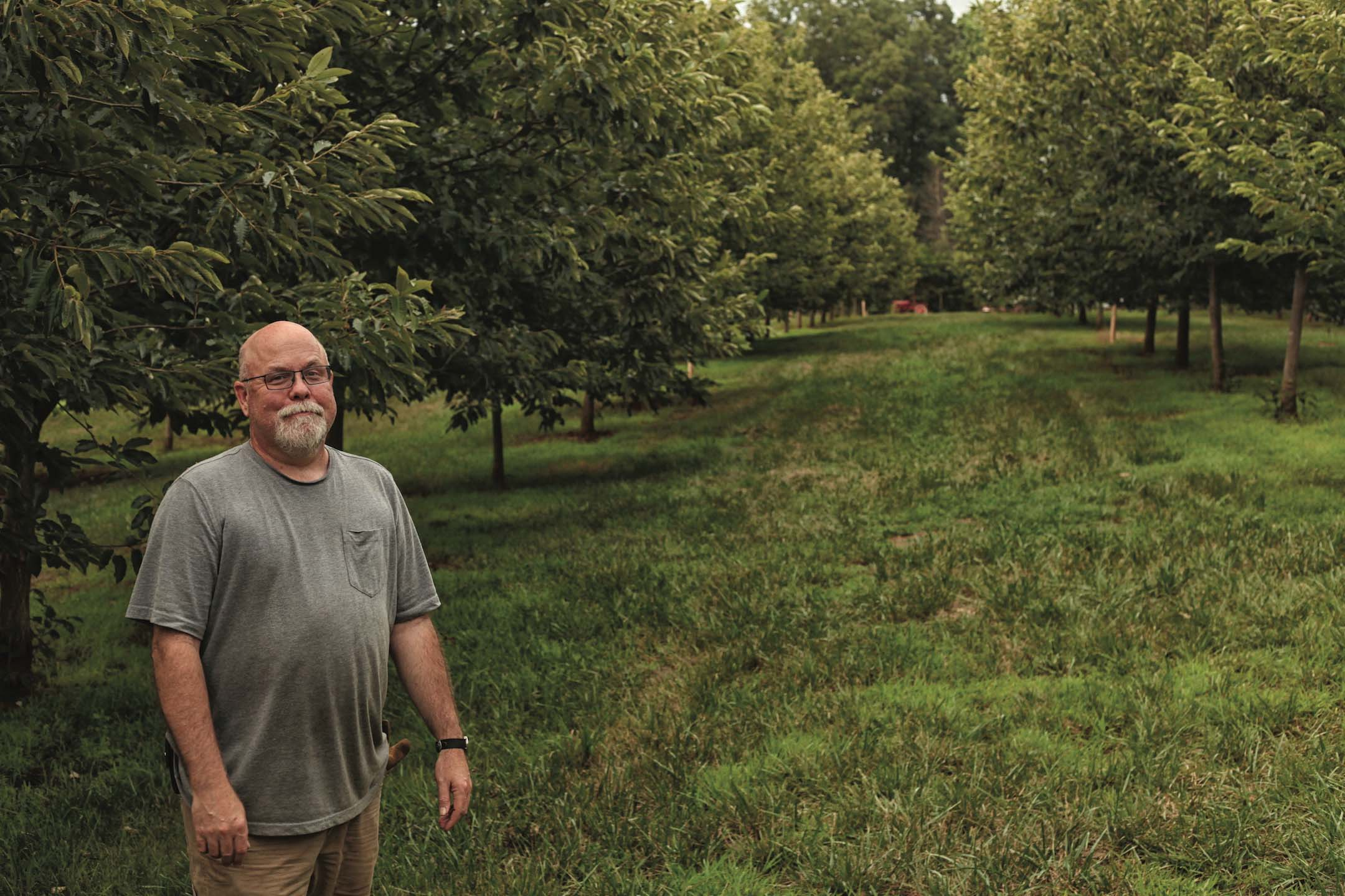 Legacy Crop, Virginia Chestnuts, Nelson County