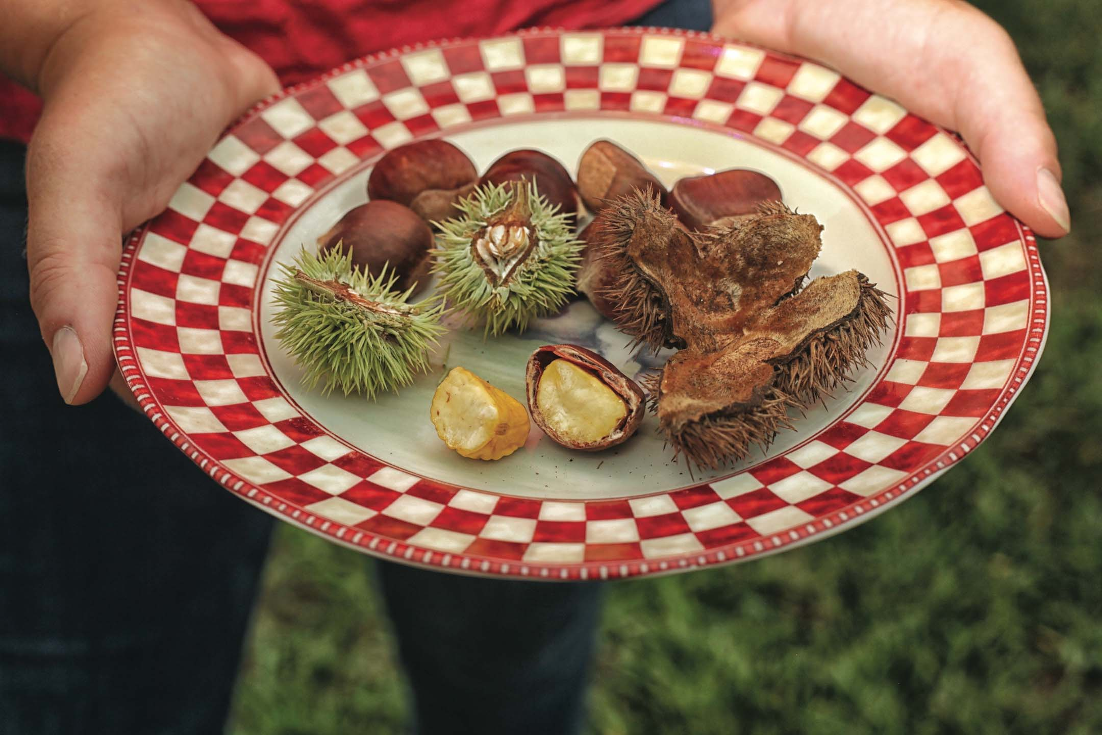 Virginia Chestnut, Rise of Virginia Chestnuts