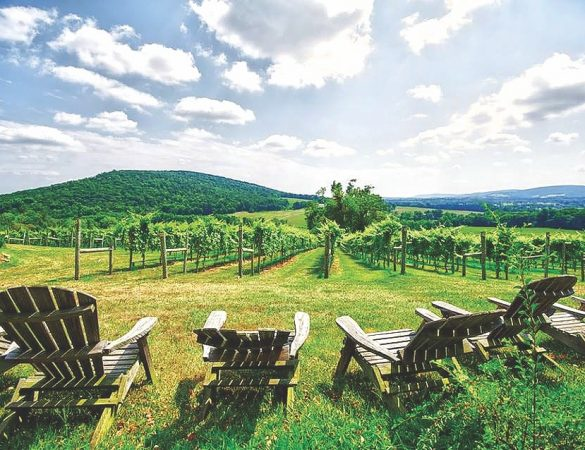 French Grape Variety Thrives in Loudoun County