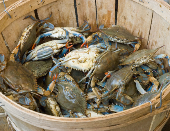 Kick Off Spring with Crustacean Celebration at Tides Inn