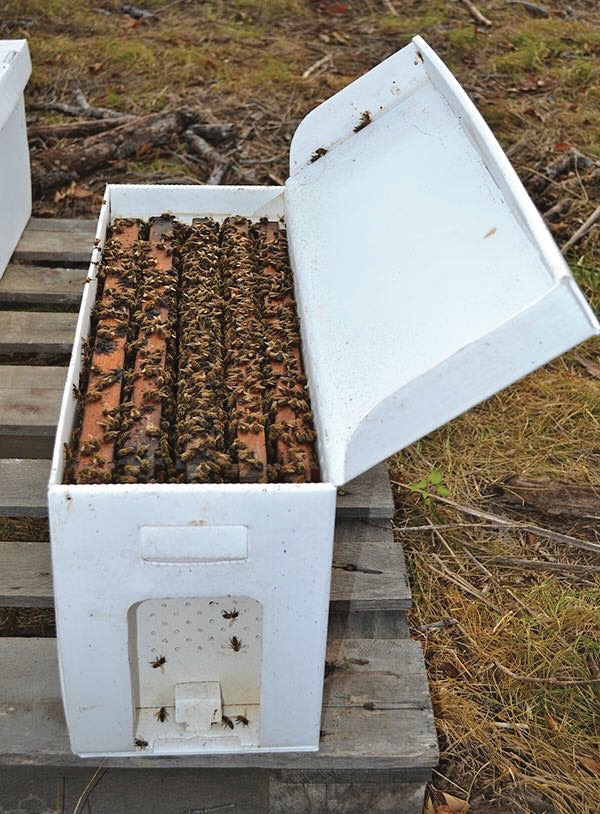 bees making honey