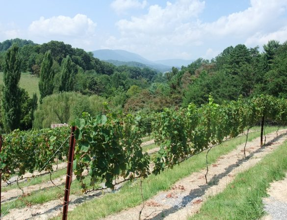 Meet the First Winemakers of Giles County