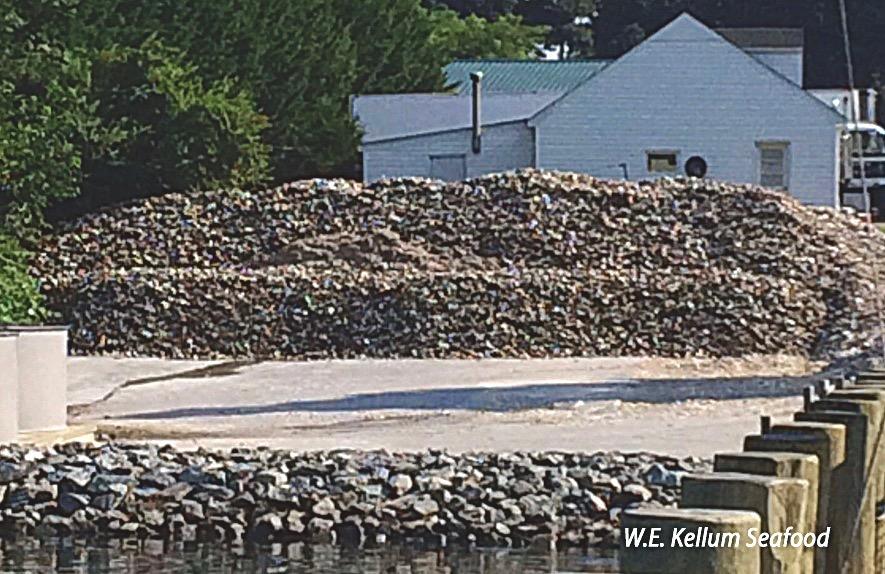 oyster shells, W.E. Kellum Seafood