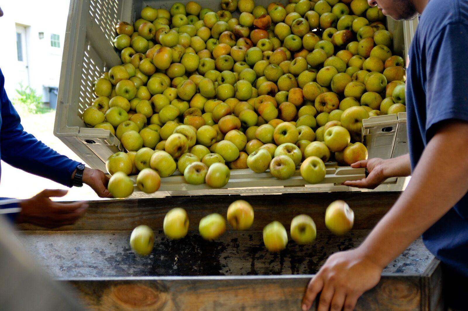 Virginia Apples, Virginia Cider Week