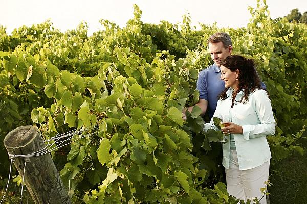 VWL Rockbridge Vineyard