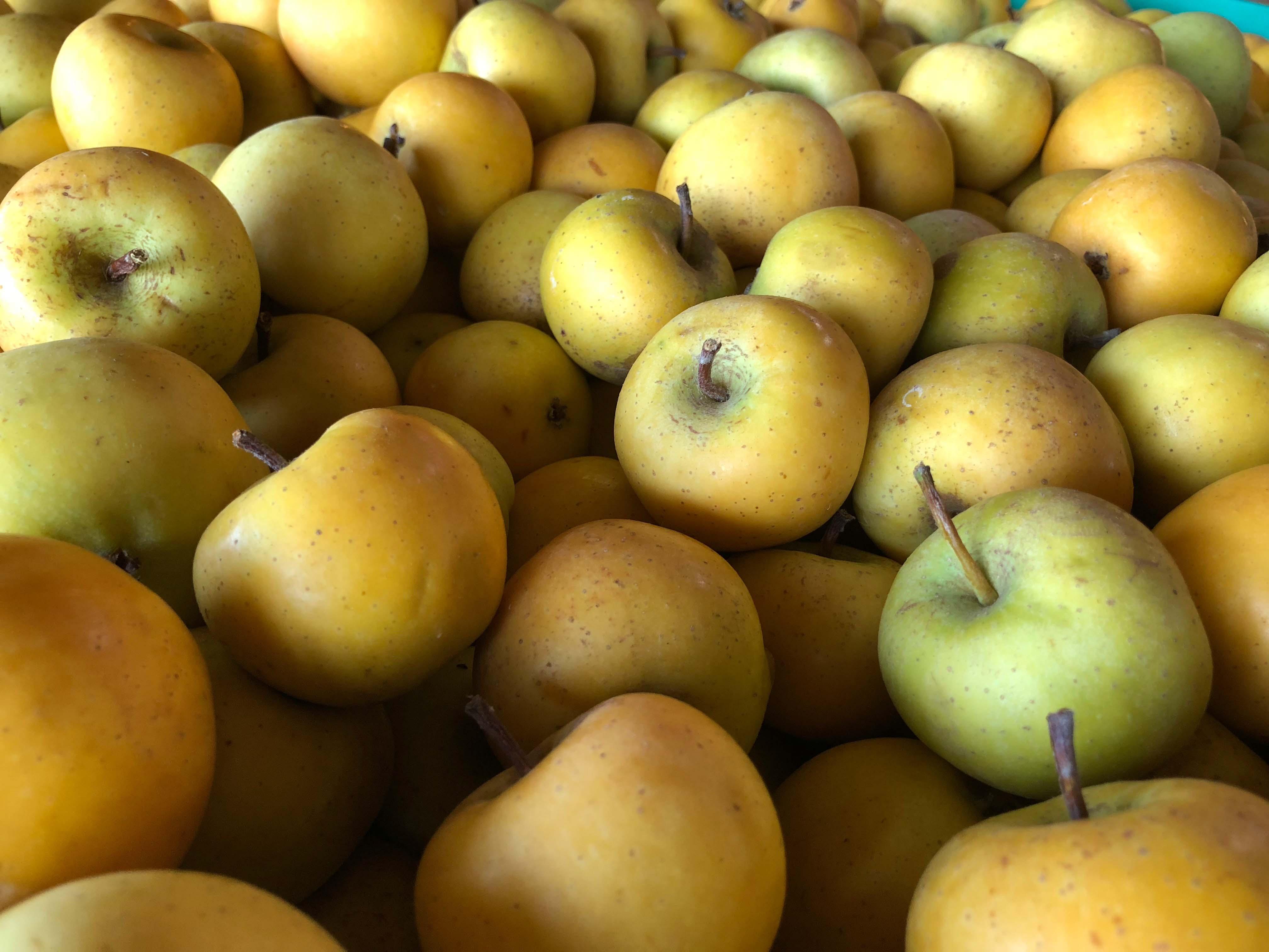 Virginia apples, cider