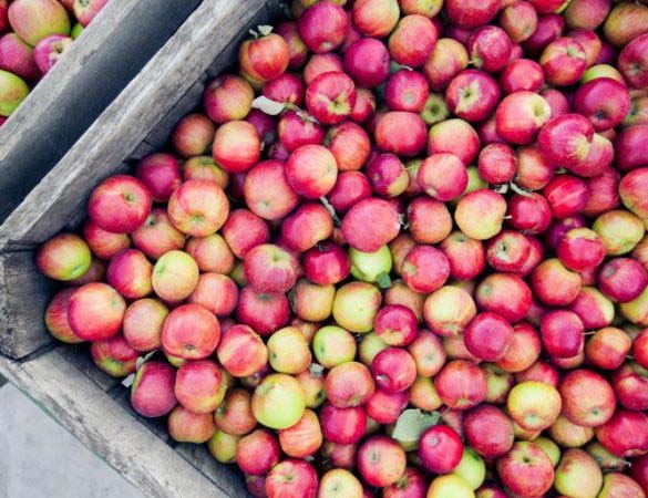 Cider Week Virginia Events