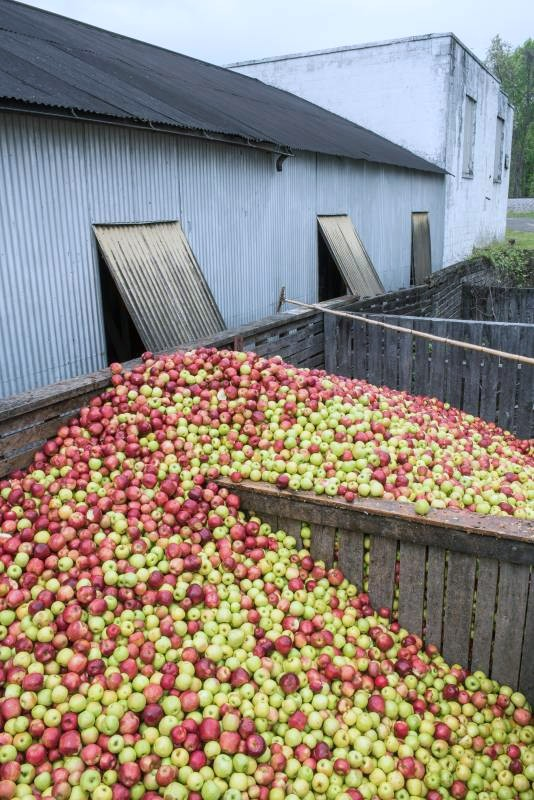 distillery apple bins