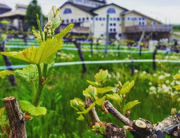 Barrel Oak Winery Turns 10