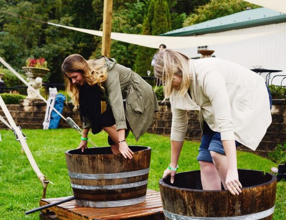 Veramar Vineyard Hosts Annual Grape Stomping Festival