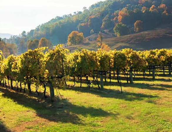DuCard Vineyards: A Unique, Gorgeous and Award-Winning Authentic Farm Winery