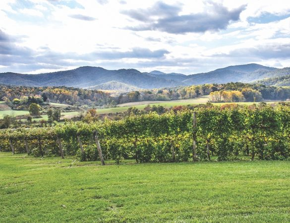 Virginia Rosés to Sip and Serve this Summer