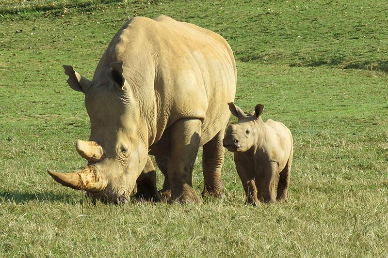 rhino virginia safari park