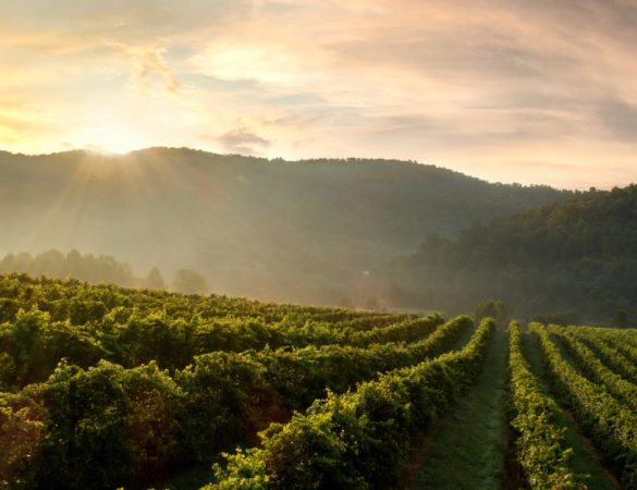 Taste This Year's Best on the Gold Medal Wine Trail