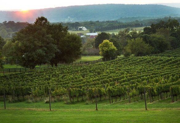 Signature Virginia Red Commemorates 400 Years of Winemaking History
