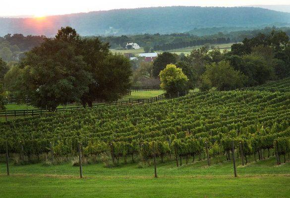 Signature Virginia Red Commemorates 400 Years of Winemaking History