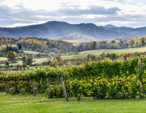 Celebrating Virginia Wine Month